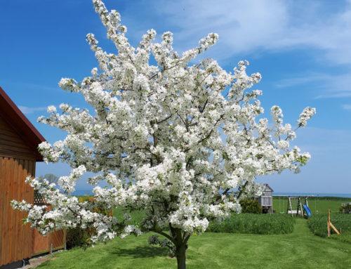 schöner Obstbaum